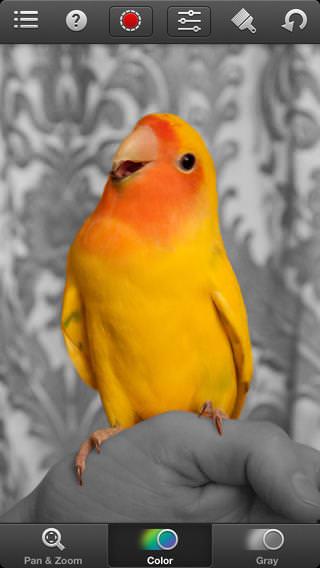 Color Splas_2