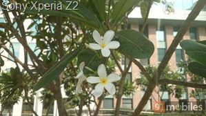 Sony Xperia Z2 (7)