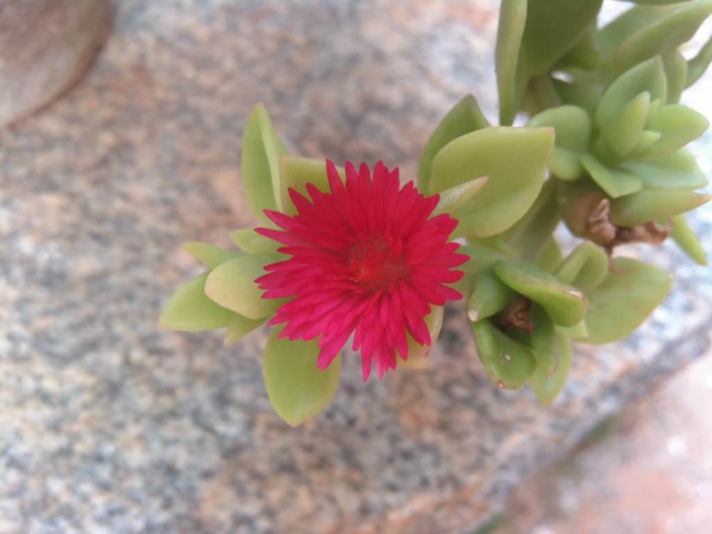 Lava Iris X1_ close up