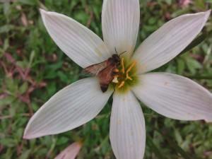 Lava Iris X1_ image sample_6