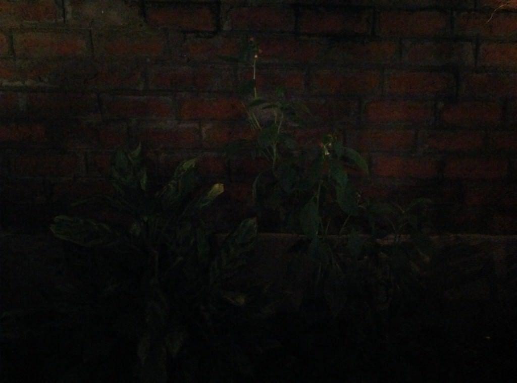 OnePlus One_camera performance_low light
