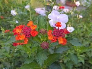 Microsoft-Lumia-640XL_camera-performance_close-up.jpg