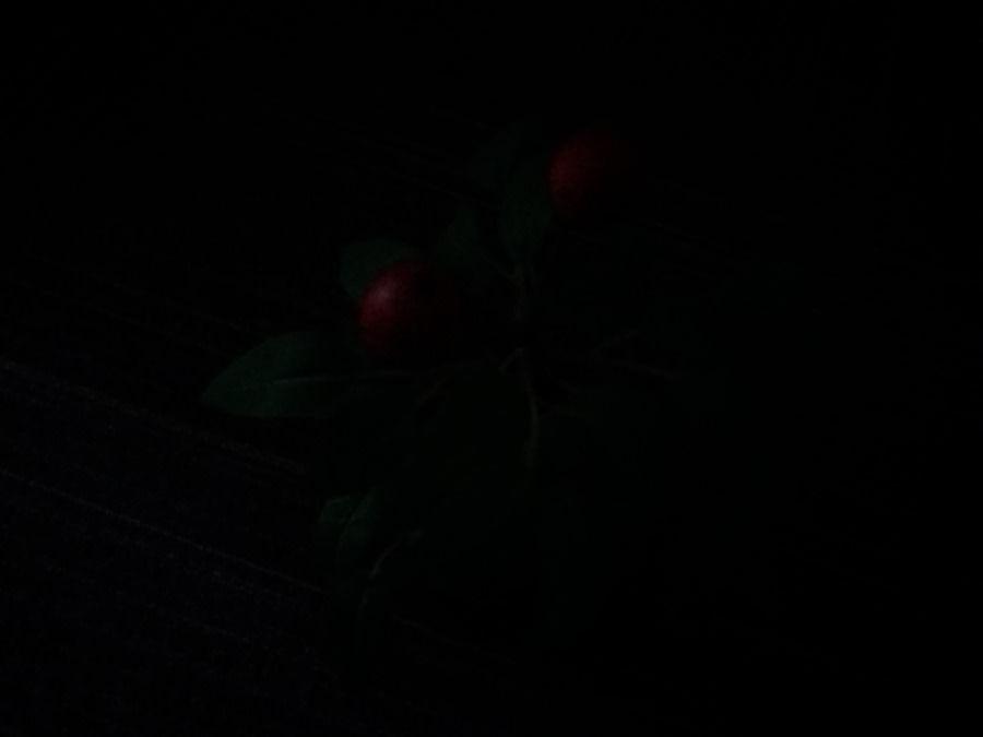 Samsung Galaxy J5 camera samples - low-light shot