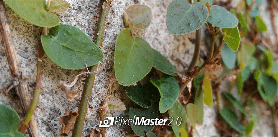 43. Shot with ZenFone 2 Laser PixelMaster Camera