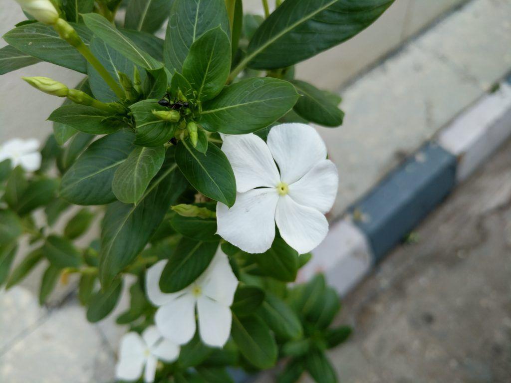 google_pixel_closeup_white_flower