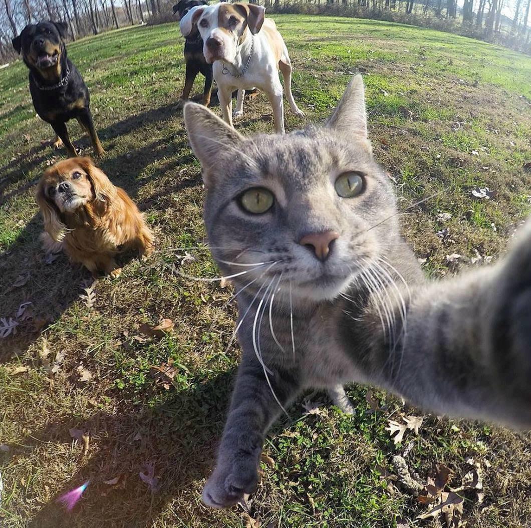 Manny, the Selfie cat