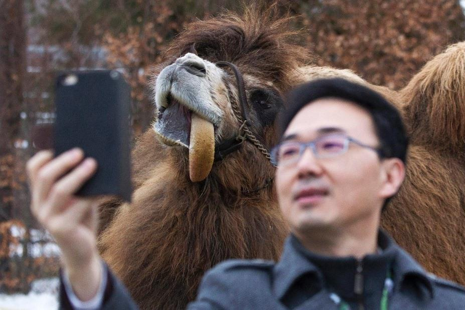 Selfie with a Camel at the Toronto zoo